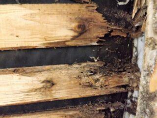 腐朽した木材